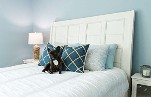 Sylvania Home A19 8.5W Soft A29 LED , Count